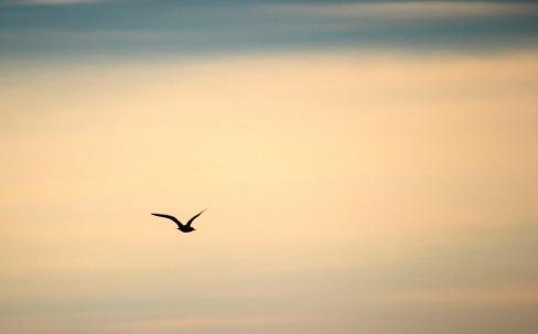 bird-189347_960_720